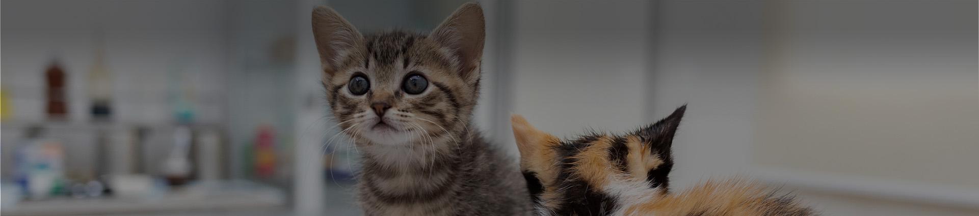 Młode koty